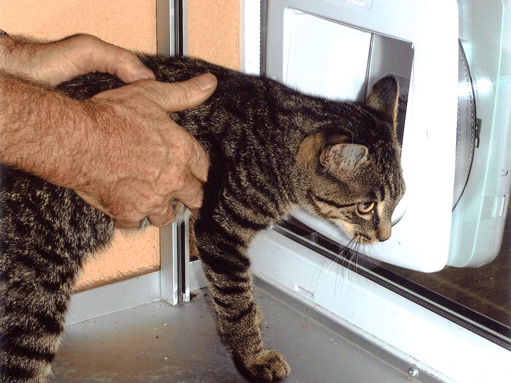 Katzenschleuse